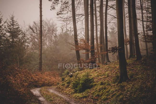 Дикий лес на осень — стоковое фото