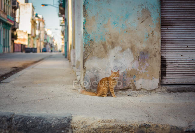 Cat sitting near concrete wall — Stock Photo