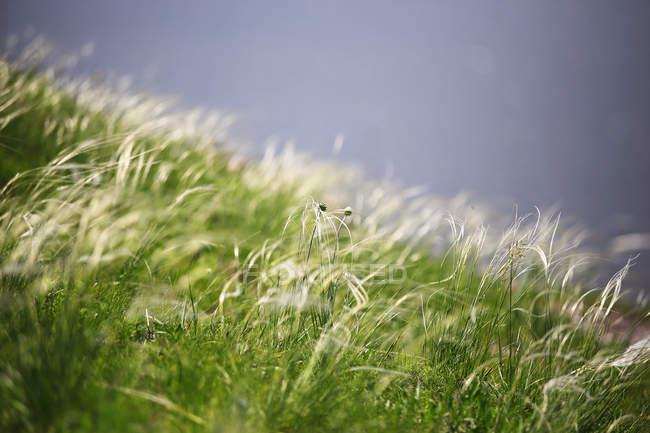 Дикий луг с зеленой травы — стоковое фото