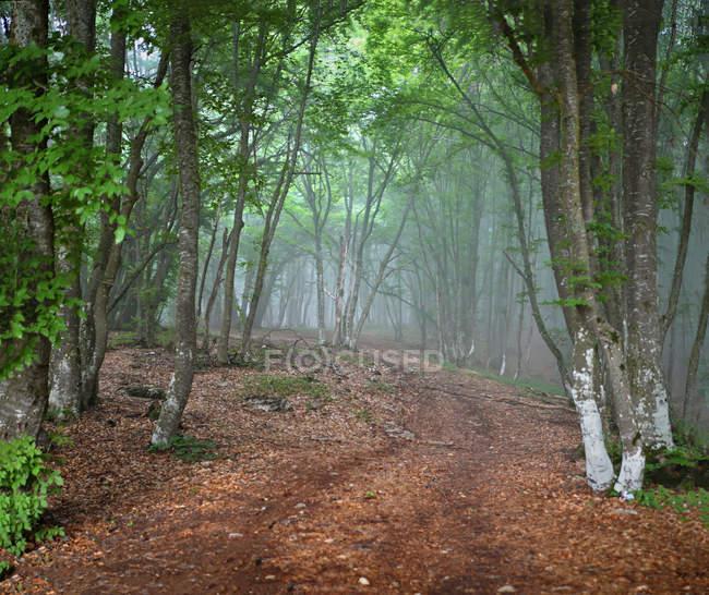 Nebligen Wald auf der Krim — Stockfoto