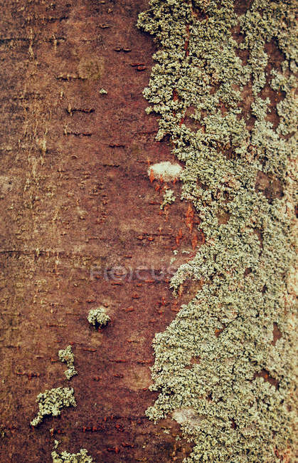 Textures of tree bark and moss — Stock Photo