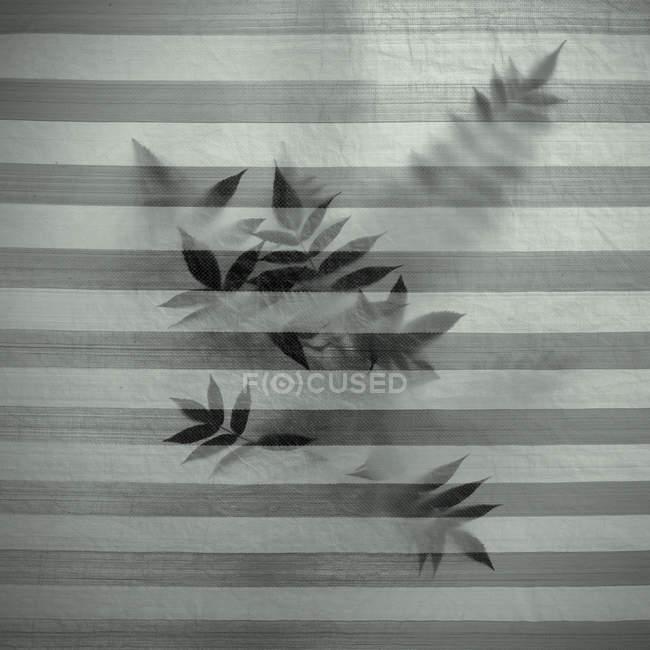 Folhas de plantas atrás do tecido — Fotografia de Stock