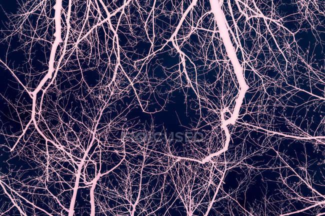 Tree bare branches — Stock Photo