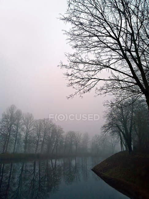 Trees by canal in foggy weather — Stock Photo