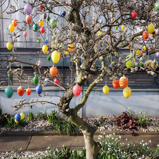 Painted Easter eggs hanging on tree branches outdoors — Stock Photo