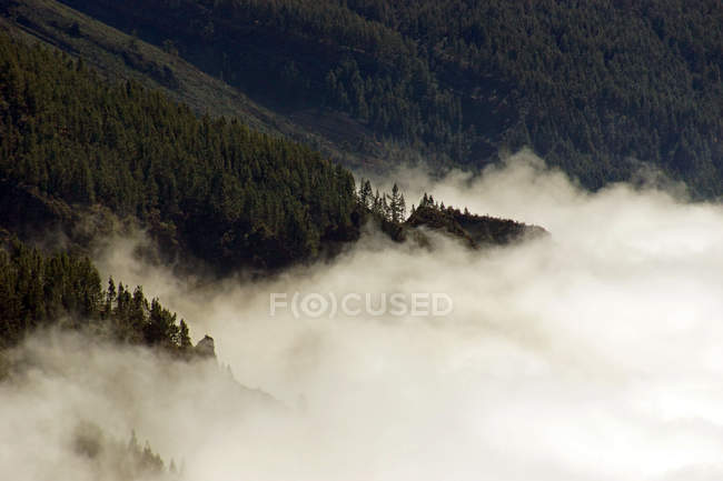 Aerial view on summer forest with clouds — Stock Photo