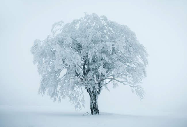 Árbol solitario en el paisaje de invierno Nevado - foto de stock
