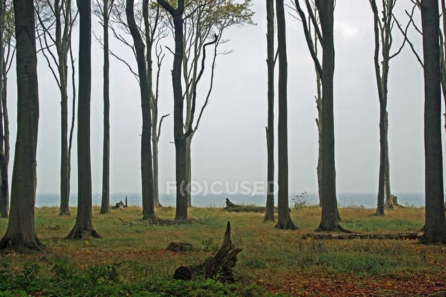 Forest growing by the seashore — Stock Photo