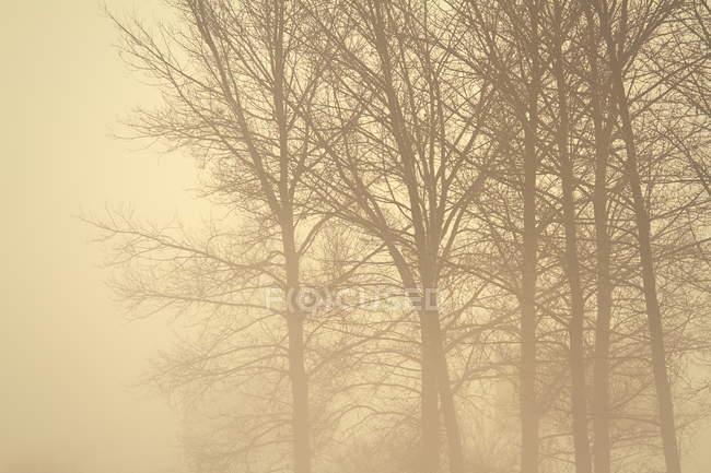 Niebla en el bosque en la mañana - foto de stock
