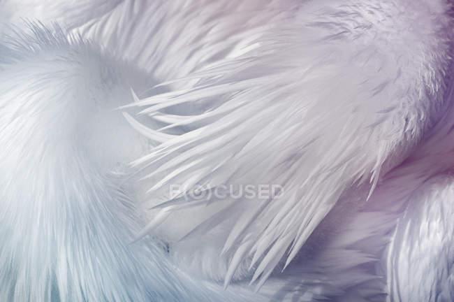 Крупным планом вид белых птиц пернатых — стоковое фото