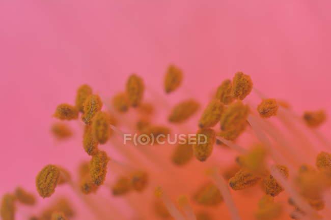 Flower calyx details — Stock Photo