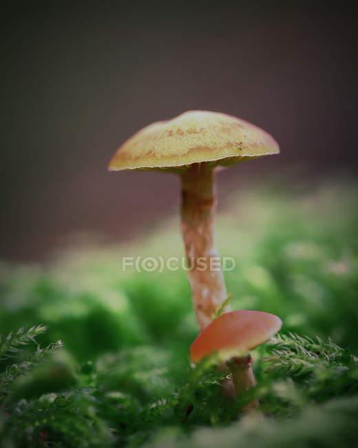Growing mushroom, close-up — Stock Photo