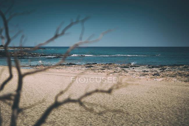 Пейзаж с веток деревьев и песчаный пляж — стоковое фото