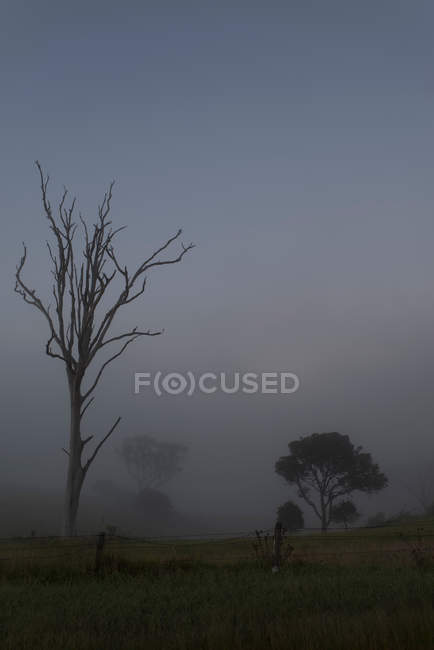 Trees on field in foggy weather — Stock Photo