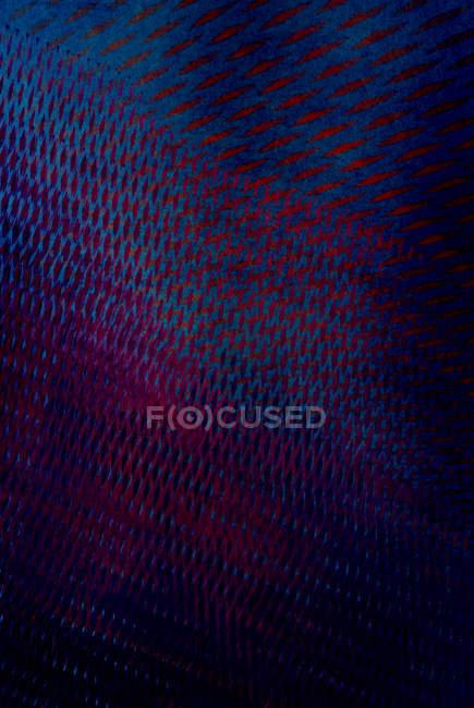 Фиолетовый синий сетки сетка структура поверхности — стоковое фото