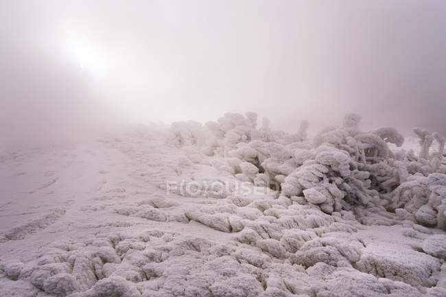 Snowy mountain landscape in foggy weather — Stock Photo