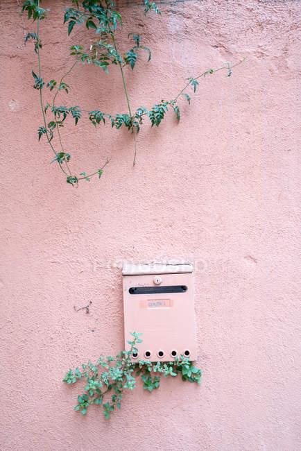 Rosa Postfach und Gebäudewand mit Laub Pflanze wächst — Stockfoto
