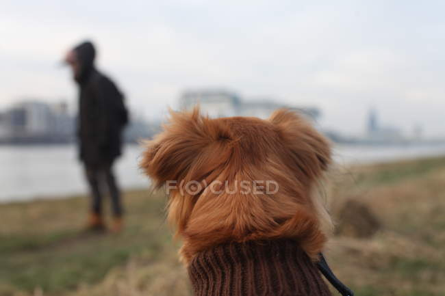 Вид сзади человека прогулки с собакой на открытом воздухе — стоковое фото
