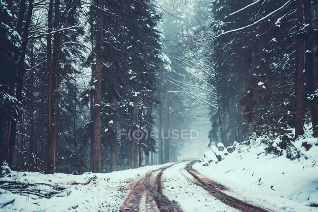 Дорога через снежное еловый лес — стоковое фото