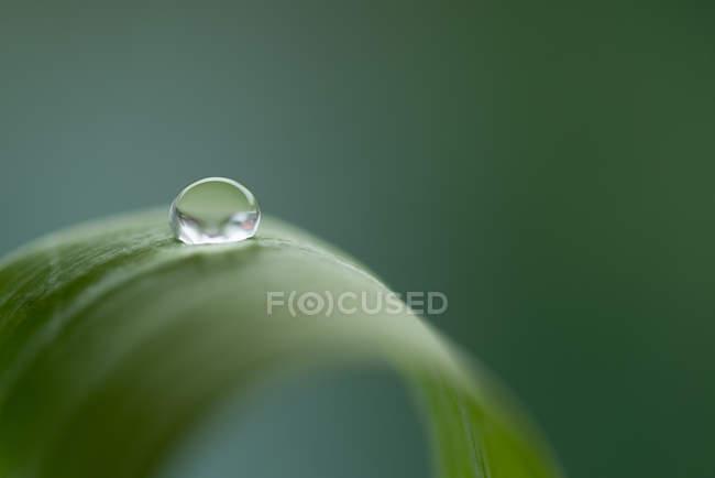 Plant leaf et l'eau goutte — Photo de stock
