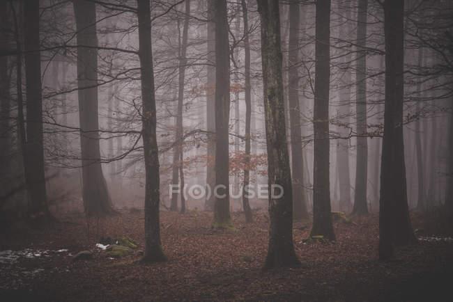 Orest in tempo nebbioso — Foto stock