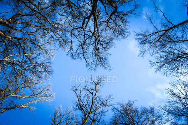 Гілки дерев лісу ведмідь — стокове фото