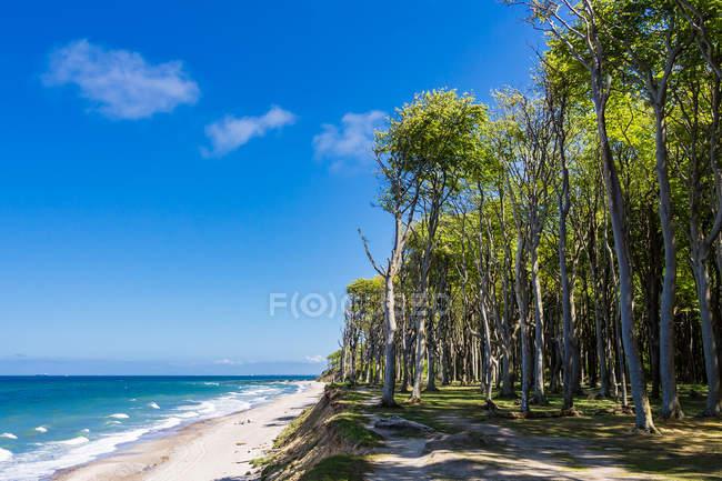 Sandige Küste und Bäume — Stockfoto