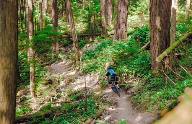 Vue arrière de l'homme en vélo sur la forêt — Photo de stock