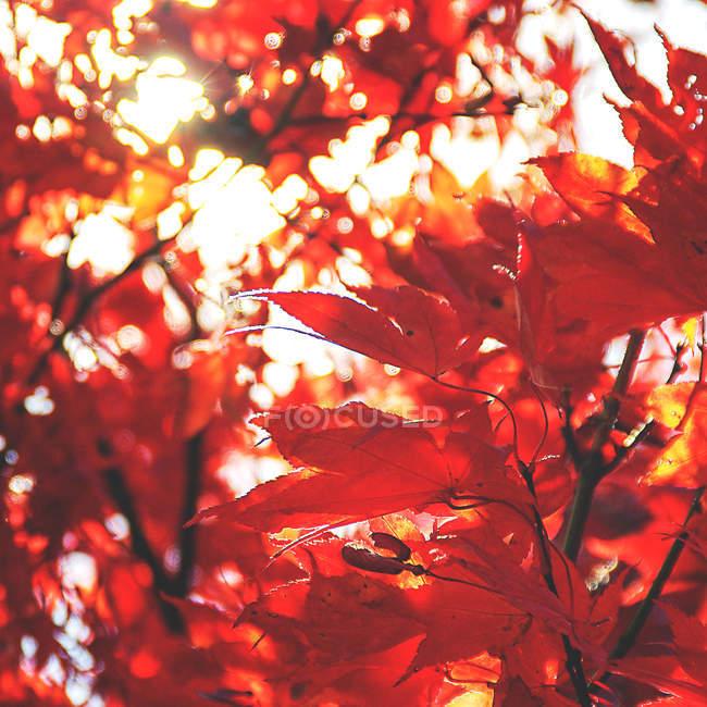 Красочные осенние листья — стоковое фото