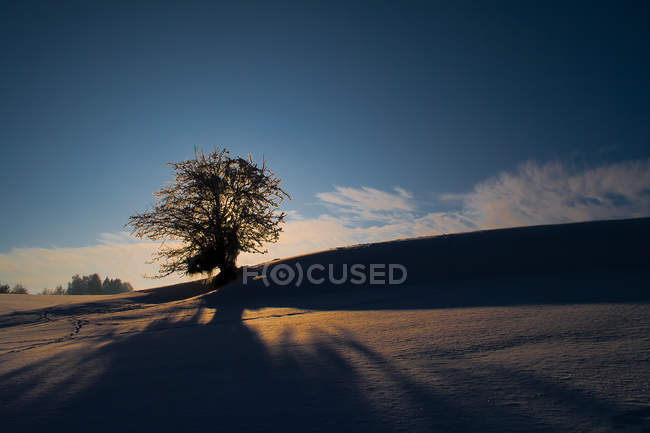 Landscape with tree on snowy field — Stock Photo