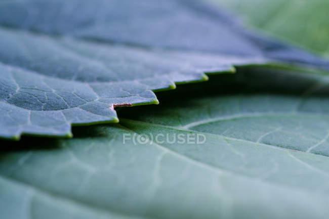 Garden plant leaves — Stock Photo