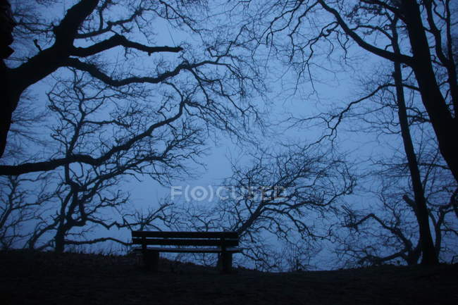 Bench and trees branches in dusk — Stock Photo