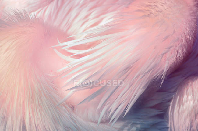 Крупным планом вид розовый пеликан перьев — стоковое фото