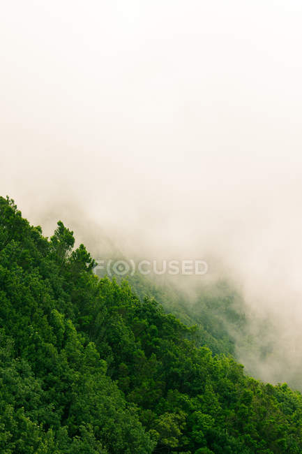 Trees on slope  in foggy weather — Stock Photo