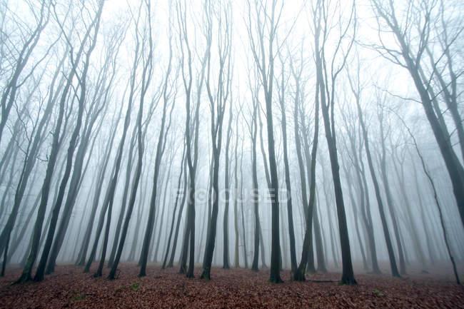 Лесные деревья с голыми ветвями — стоковое фото