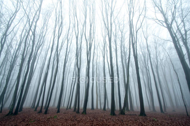 Forest trees with bare branches — Stock Photo