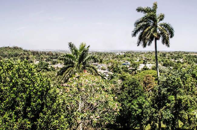 Paisagem tropical com palmeiras e árvores — Fotografia de Stock
