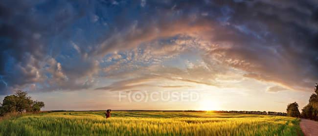 Panorama por do sol em campos de cereais de primavera — Fotografia de Stock