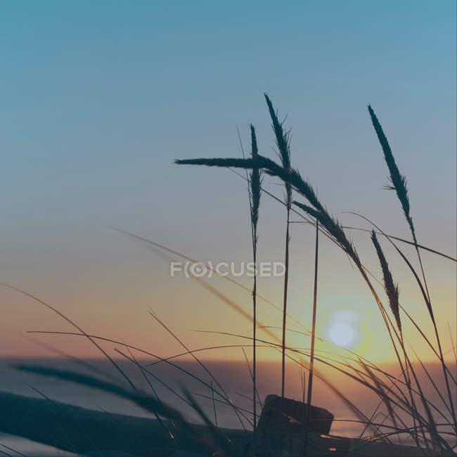 Вдень захід сонця на пляжі — стокове фото