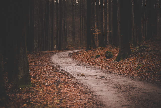 Footpath in autumn forest — Stock Photo
