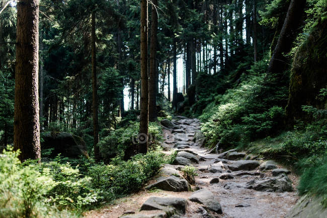 Elbe Sandstone Mountains — Stock Photo