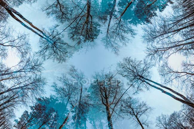 Дерева лісу на осінь — стокове фото