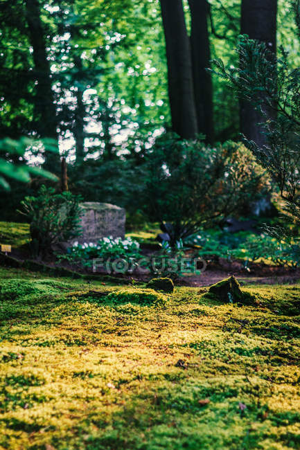 Green moss growing on forest glade — Stock Photo