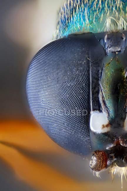 Vue rapprochée de la tête de la mouche — Photo de stock