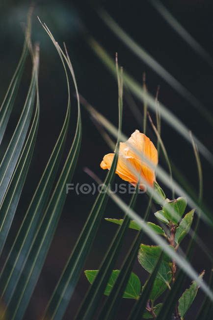 Closeup view of exotic blooming flower and palm leaf — Stock Photo