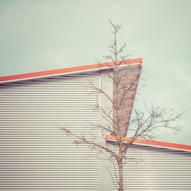 Exterior shot of building facade and tree — Stock Photo