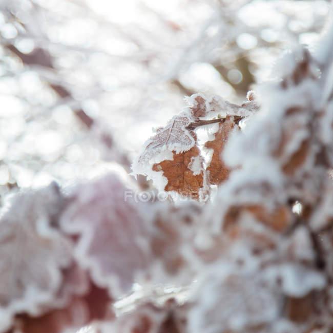 Ветки с листьями, замороженные — стоковое фото
