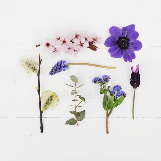 Vista del primo piano delle piante di fioritura su sfondo bianco, piatto lay — Foto stock