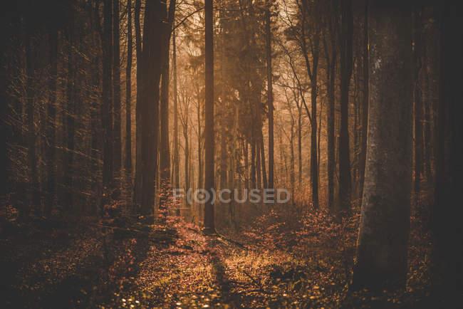 Evening sunshine on forest glade — Stock Photo