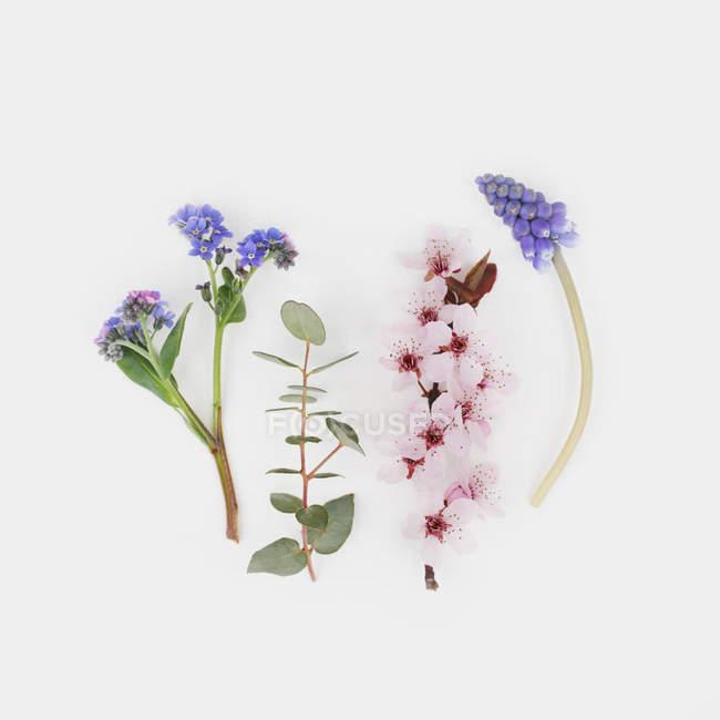 Detailansicht der Blütenpflanzen auf weißem Hintergrund — Stockfoto